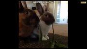 خنده دار ترین حیوانات خانگی(حتما ببینید!!!) - قسمت اول