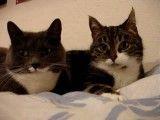 گفتگوی عاشقانه دو گربه