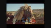 رقص اسب پونی(همون اسب های کوچک و زیبا)