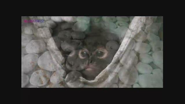 عجیب ترین روش های قاچاق حیوانات وحشی+اسلایدشو