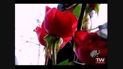 انعکاس خبری مستند کبوترحرم (شهید غلامعلی رجبی)