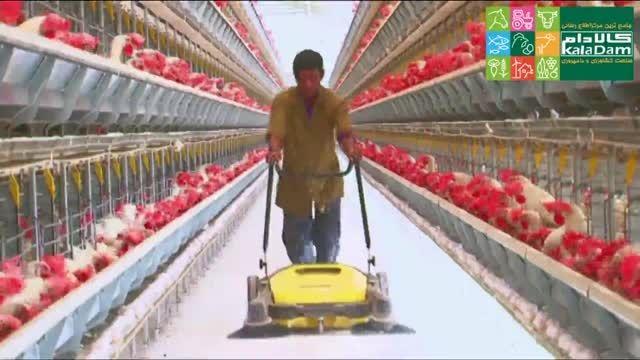 تجهیزات پیشرفته در مرغداری مرغ تخم گذار در هند