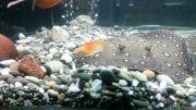 تغذیه سفره ماهی با ماهی زنده