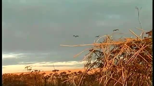 آموزش هوازنی با تفنگ ساچمه زنی