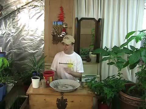 راهنمای انتخاب خاک گیاهان آپارتمانی
