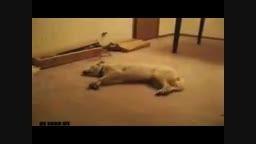 خواب دیدن سگ وهراس دیدن خواب