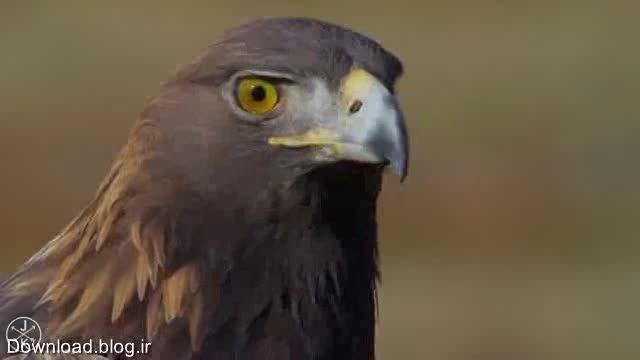 تصاویری زیبا از پرندگان