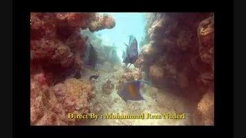 زیبایی های خلیج فارس - غواصی تفریحی در جزیره کیش