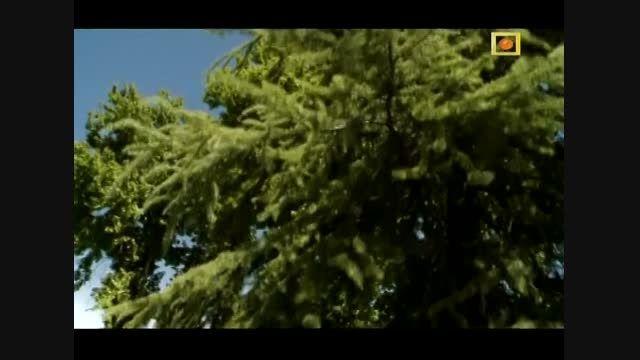 مستند پردیس های ایرانی (باغ های تاریخی شیراز)