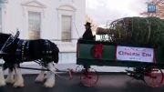 مراسم تحویل کاج کریسمس مخصوص به کاخ سفید
