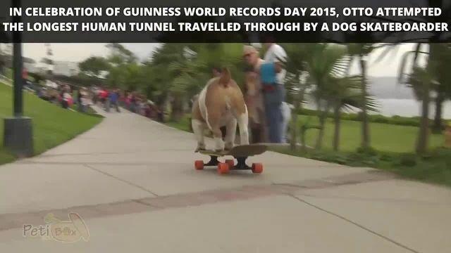 شکسته شدن رکورد جهانی گینس توسط سگ اسکیت باز