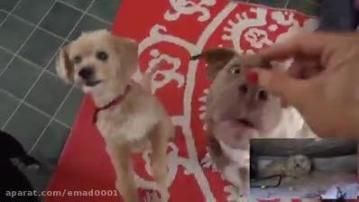محبت کردن به سگ های ولگرد خیابانی