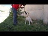 آموزش سگ دست دادن پارس کردن