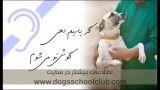آموزش سگ کمک رسان به نابینایان در باشگاه مدرسه سگها