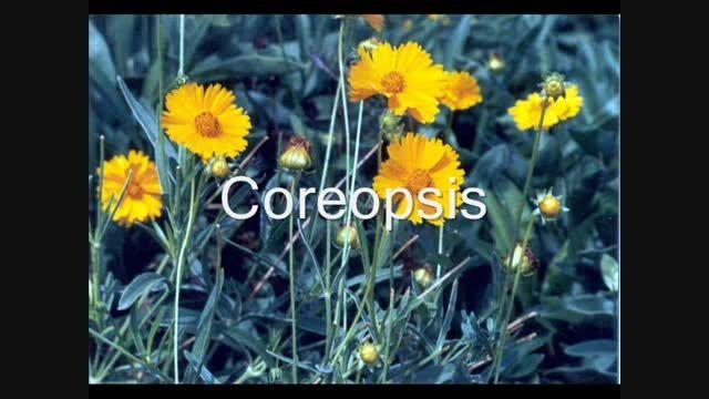 مجموعه ای از زیباترین گل های دنیا