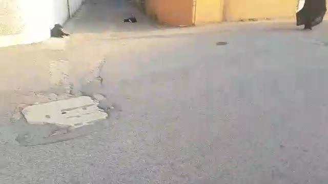 تجمع سگ های ولگرد در خیابان فرهنگ شهر خمام