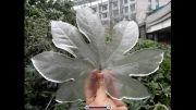 تغییر ناگهانی آب و هوا، خسارت میلیاردی به گلها و گیاهان