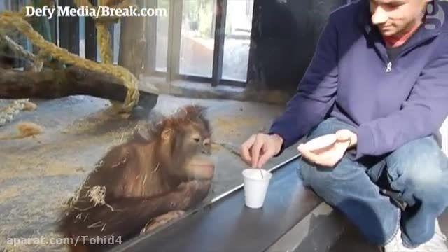 میمون و شعبده بازی