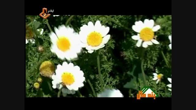 ساقی - خواننده : جمشید عزیز خانی