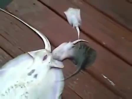 زایمان عجیب یک ماهی و خودکشی دسته جمعی