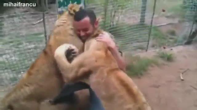 دوستی و محبت کردن درنده ترین حیوانات به انسان