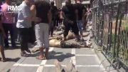 جنایت جدید داعش در شهر رقه