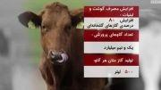 خوردن گوشت چقدر به محیط زیست اسیب میزند
