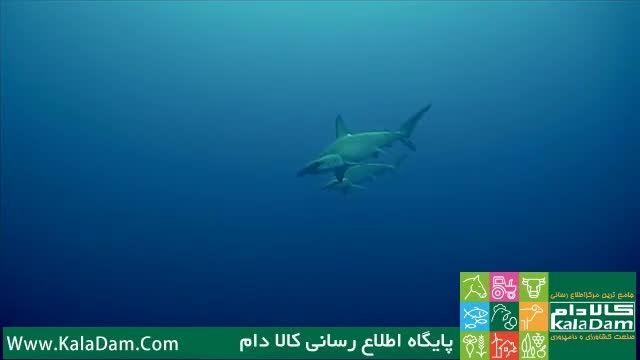 کلیپی خارق العاده از زیبایی های اعماق دریا