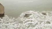 خطر ناک ترین موجود دریایی