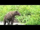 فرار نکردن از خرس