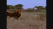 مستند فوق العاده زیبای حیات وحش افریقا(قسمت اول)