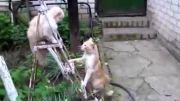 عجب سرعت ضربه ای داره گربه هه
