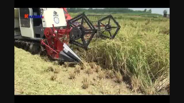 افزایش دو برابری برنج توسط نانو کودهای کلاته خضراء