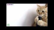 حرکات فوق العاده با مزه حیوانات خانگی