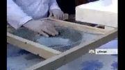 تولید و صادرات خاویار نخستین بار در خوزستان !