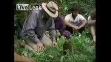 فیلم مردمی كه برای درختان مرده دسته جمعی گریه می كنند