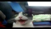 ترس گربه در خودرو.