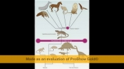 توهم تکامل