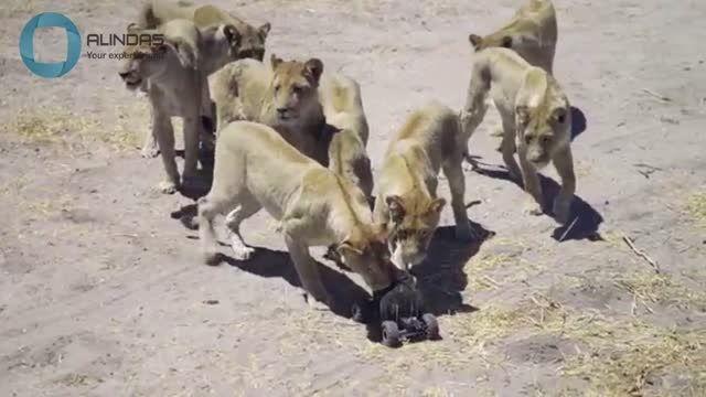 عکاسی بسیار دیدنی از حیات وحش