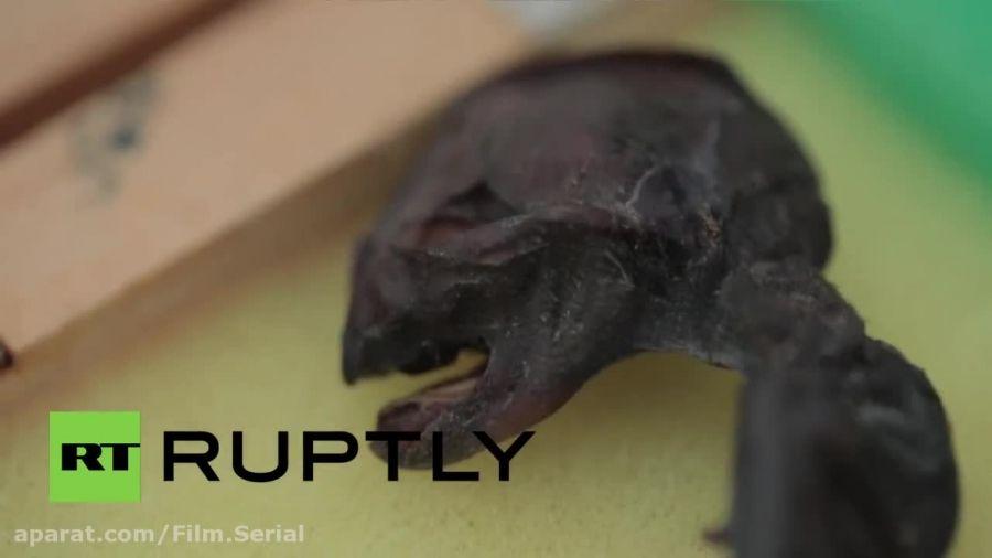 جنین پیدا شده آدم فضایی در روسیه (واقعی)