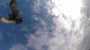 سقوط بالگرد بدون سرنشین از آسمان پس از حمله یک شاهین!