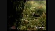 نجات عکاس از چنگال شیر درنده !!!