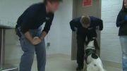 استفاده از سگ ها برای تشخیص سرطان