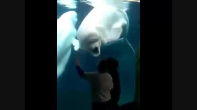 بازی نهنگ با بچه ها