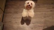 رقص سگها خیلی جالبه