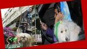 محبوبیت سگ و گربه میان بازیگران و مردم عادی...