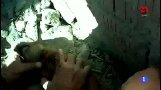 نجات بچه خوك در حال خفگى با تنفس دهان به دهان