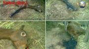 مثله کردن حیوانات توسط موجودات فضایی -18