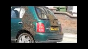 حمله زنبورها  به ماشین