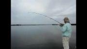 مستند کوتاه ماهیگیری با قلاب با لذت ماهیگیری